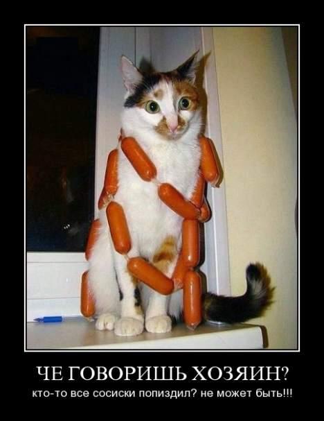 cat - Кот!