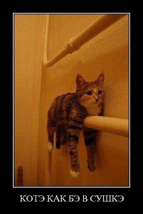 dem cat - Оревный демотиватор
