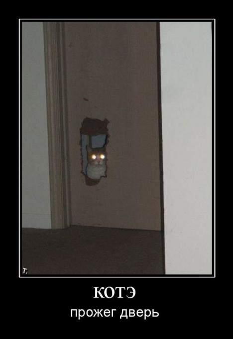 956231 kote - Лучекот прожигает дверь взглядом!