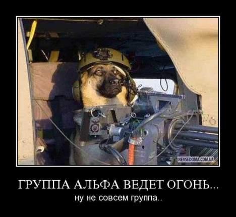 a dog - Альфа пёс