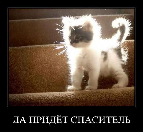 svyatocat - Светящийся святокот :) Очень позитивно
