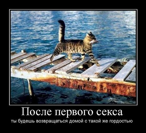 posle pervogo seksa - Довольный котэ