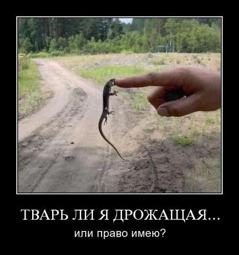 twar - Отчаянная ящерица. Сражается с человеком ;D