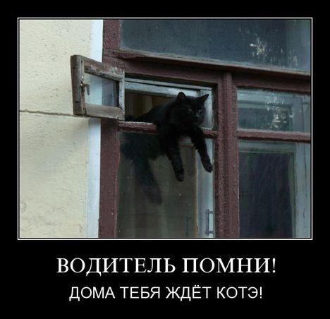vodkote - Водитель помни!!!!11