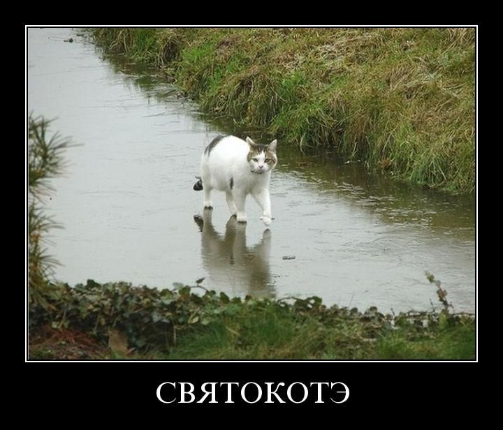 svyatokote - Святокотэ