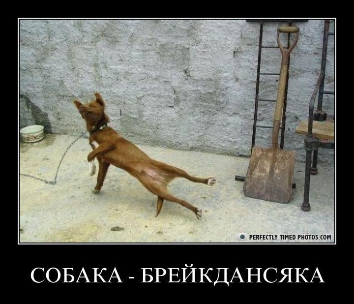 brake dog - Собака — Брейкдансяка