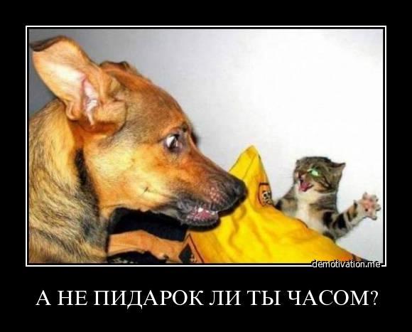 a ne pidar li ti chasom - Мегадем ))