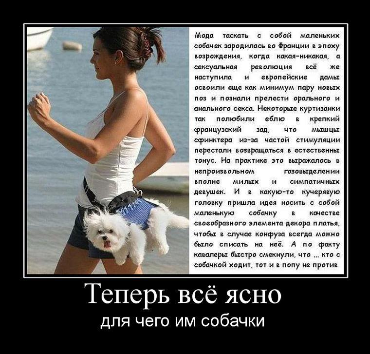 teper vsyo yasno - Зачем девушкам маленькие собачки
