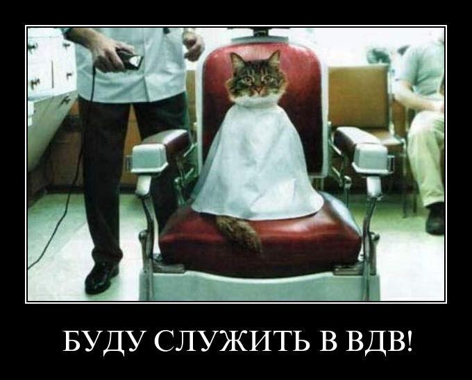 vdv cat - Буду служить в ВДВ
