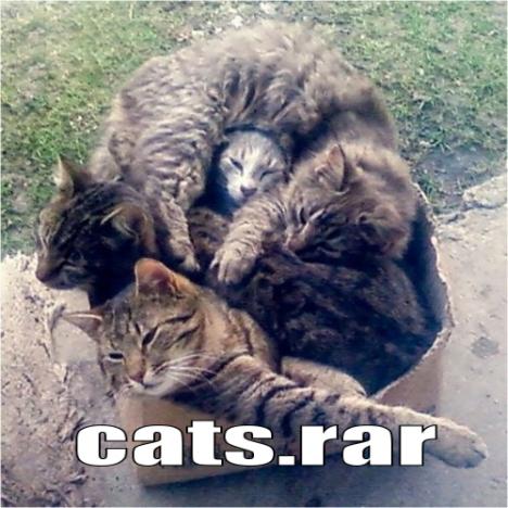 catsrar 468x468 - Cats.rar